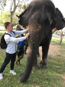 Слоны на Шри Ланке.