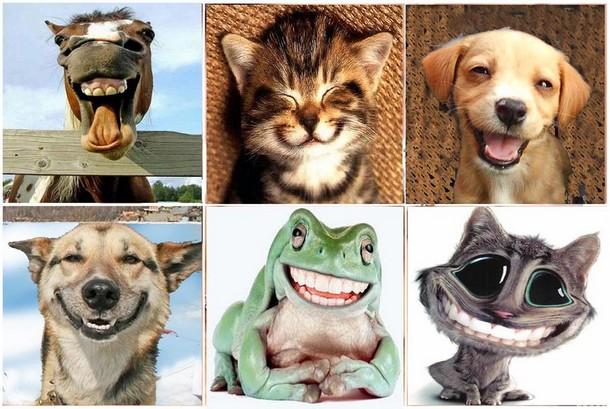Животные смеются