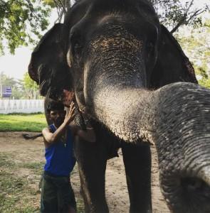 Фото. Красивая слониха, 20 лет, Шри Ланка. Дондра