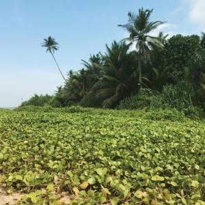 Шри Ланка, около пляжа фото